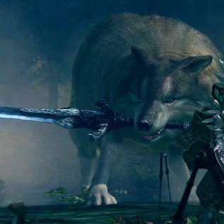 sif-the-great-gray-wolf